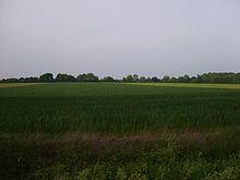 Vue sur une plaine agricole et bocage au fond.