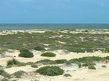 Paysage de plage couverte de touffes d'herbe.