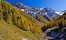 photo de paysage prise dans le parc national de suisse, elle montre la présence de forêt au pied d'une montagne et la modification de la végétation sur les flancs en montant vers le sommet, sommet quasiment uniquement rocailleux